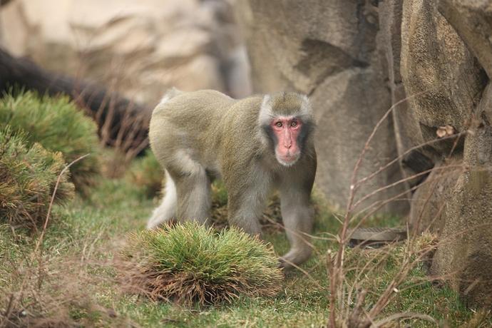Monkey%20father%201_1220